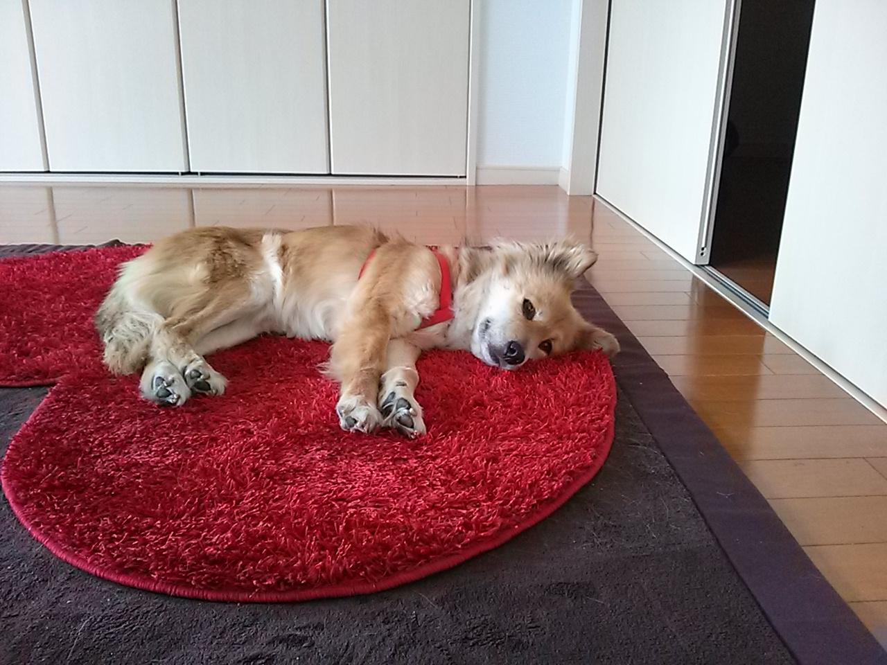 ブログ 保護 犬